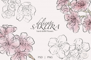 Sakura Flowers Ink & Watercolor Clip Art