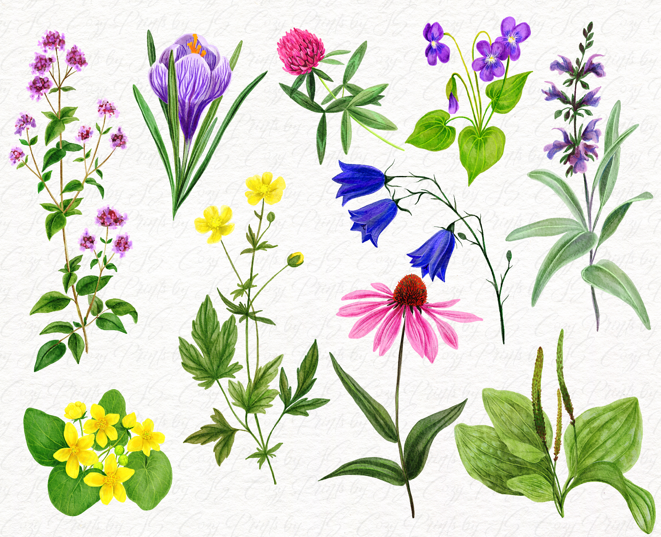 Field Flowers Watercolor Collection