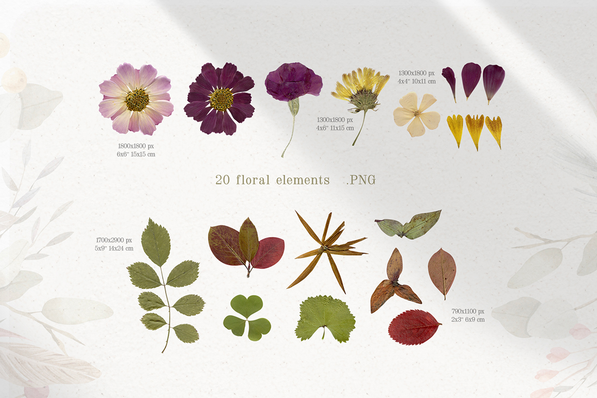 Magic Dry Flowers - Herbarium Watercolor Collection