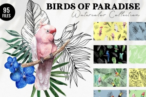 Birds of Paradise Watercolor Collection