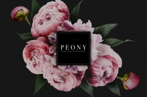 Peony Floral Clip Art Collection