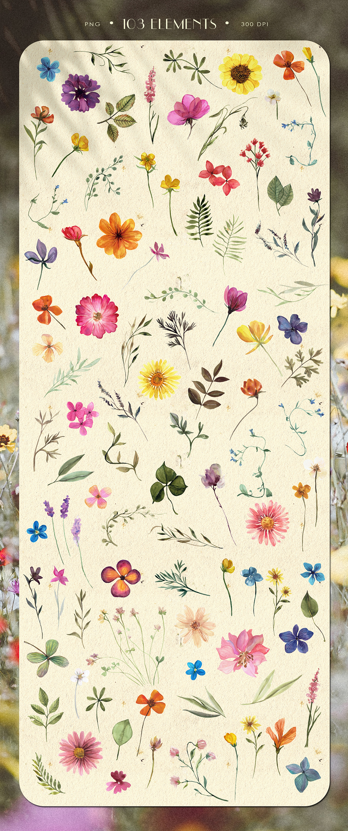 Pressed Flowers Watercolor Collection