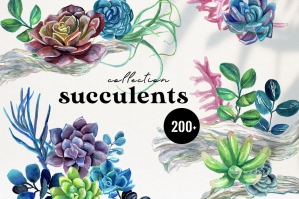 Succulents Watercolor Collection