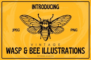 Vintage Wasp and Bee Illustrations