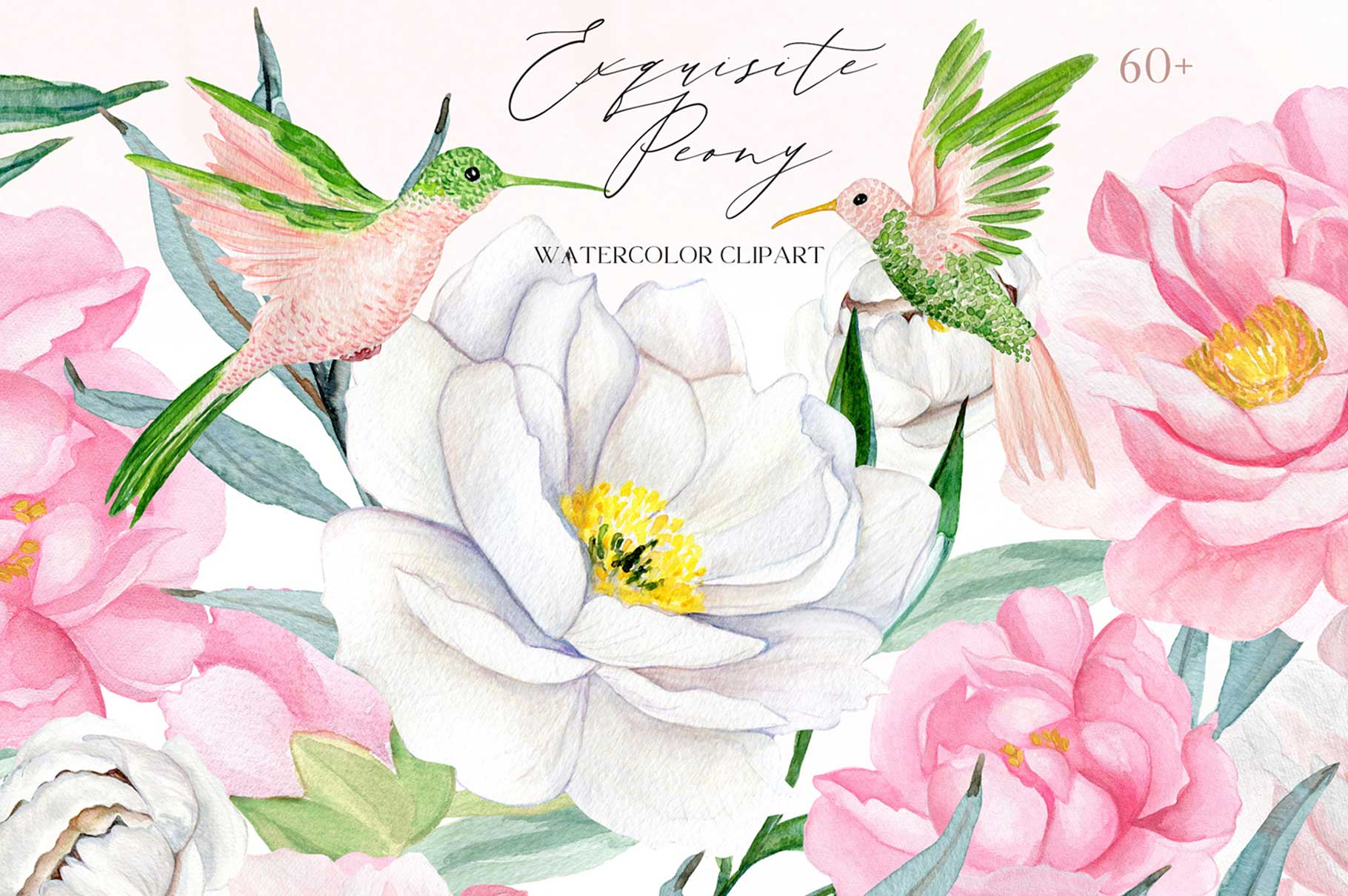 Peony Watercolor Clipart