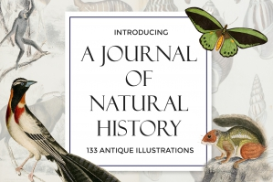 A Journal of Natural History Illustrations