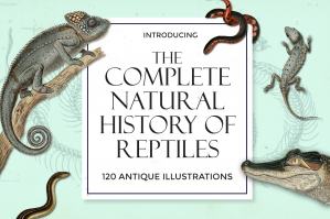The Complete Natural History of Reptiles