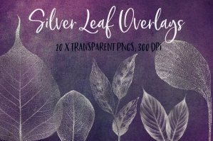 Silver Leaf Clipart