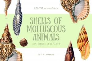 Illustrations from Shells of Molluscous Animals