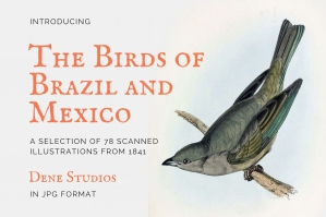 The Birds of Brazil and Mexico