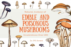 Natural History of Edible and Poisonous Mushrooms