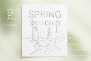 Pencil Sketches of Spring Flowers
