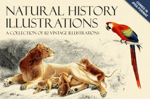 Natural History Illustrations Collection