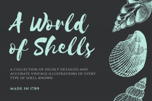 The World of Shells